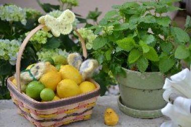 lemons limes and lemon balm for lemonade_small