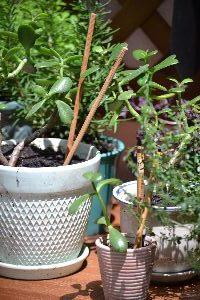 jade with chopsticks_small