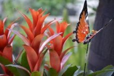 orange bromeliads_small