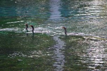 love the cormorants_small