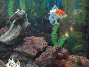 grandfish_small