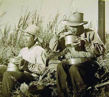 Hawaii workers