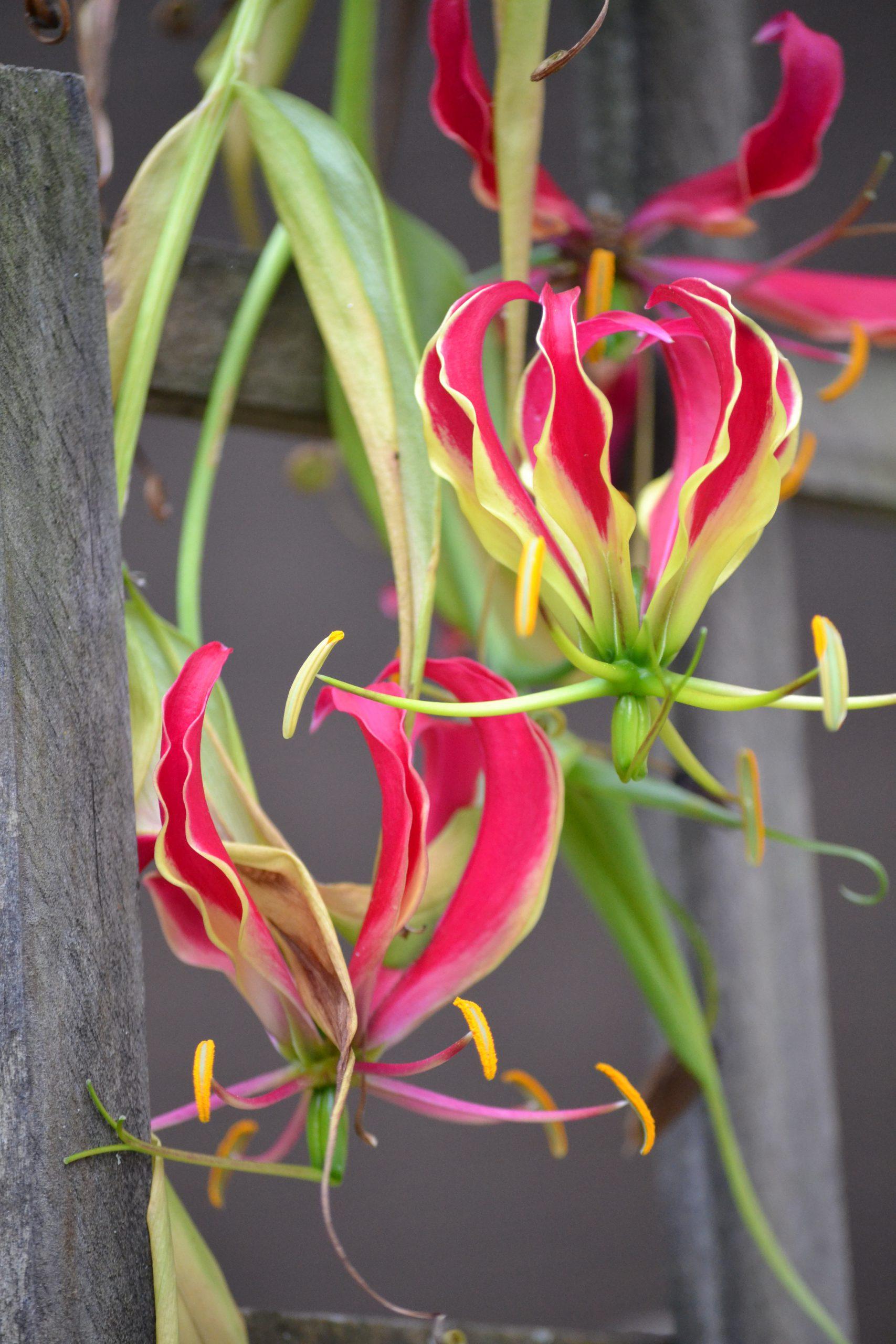 Julie Garden Blogging