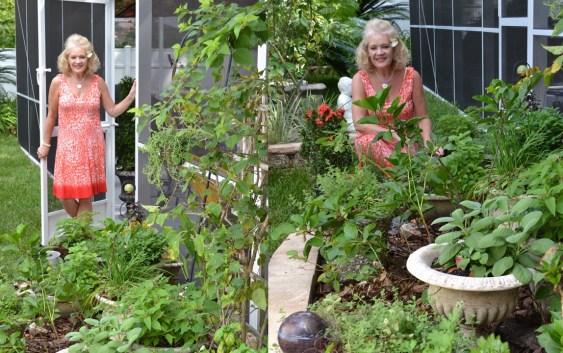 Julie's New Herb Garden