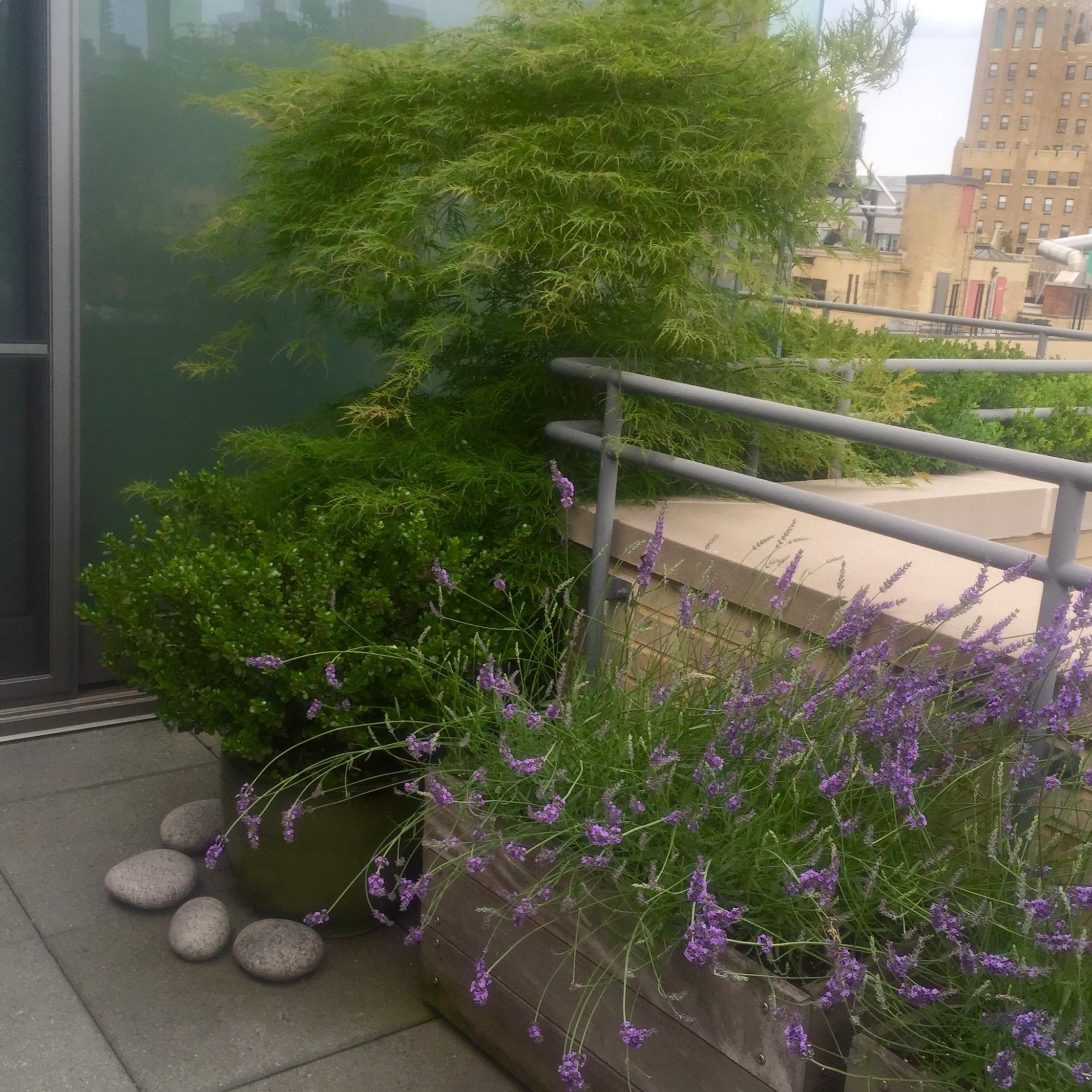 Landscape Design Internships