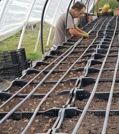 Farmer Tony planting anemones