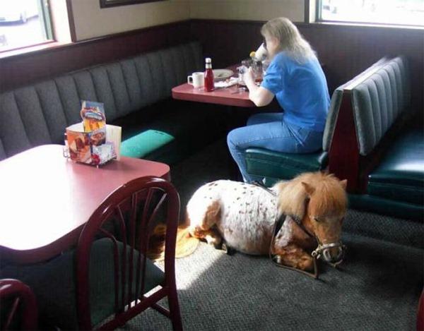 Diner-Pony