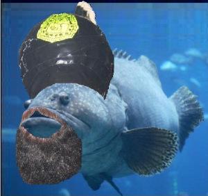 grouper-mohamed