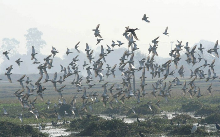 migratoria-birds-01-e1375246460738