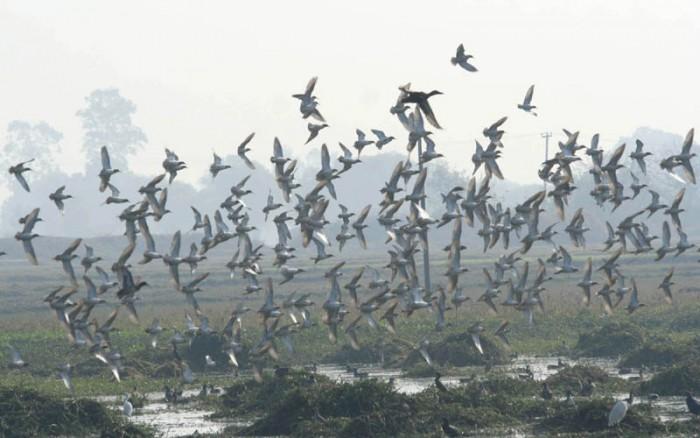 migratory-birds-01-e1375246460738