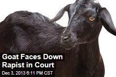 goat-faces-down-rapist-in-court