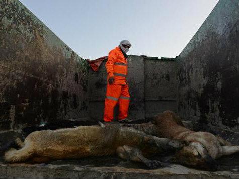 Kabul-Dead-Dogs_AFP