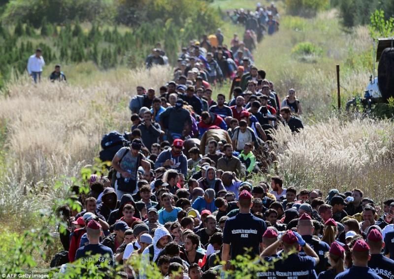 muslim-migrants-croatia-5-800x566