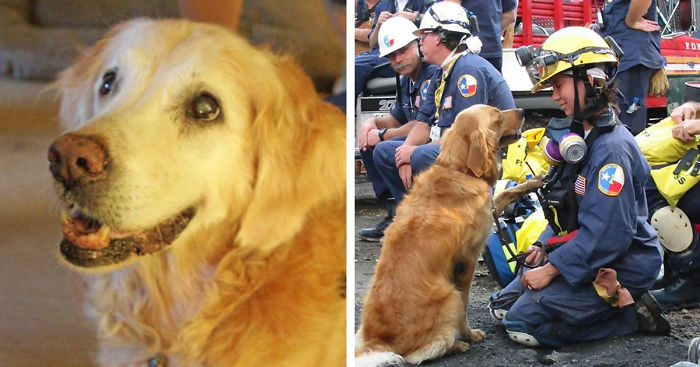 last-9-11-rescue-dog-birthday-party-new-york-bretagne-denise-corliss-fb__700
