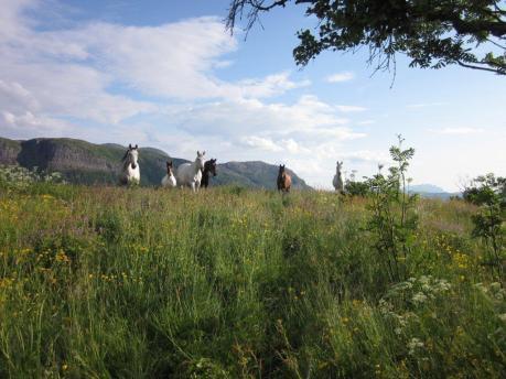 Er hesten tilvend gras er det inga fare med å sleppe på beite med rikeleg tilgang.