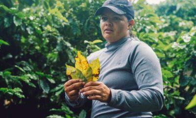 La roya del café y su efecto en el café Hawai'i
