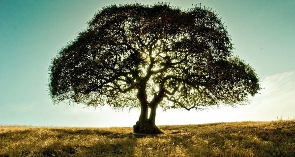 Estate Planning Checklist - A tree in a field