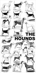 aaronco_the_hounds