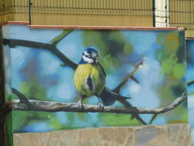 plano general del pájaro amarillo y azul