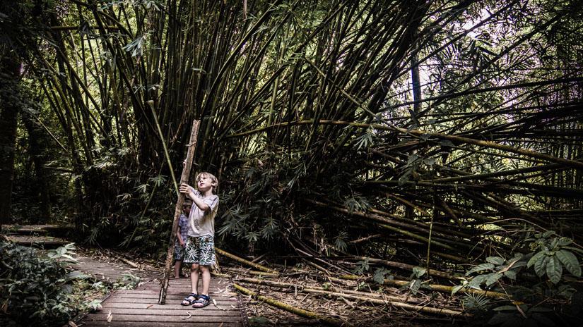 Bambus i taman negara