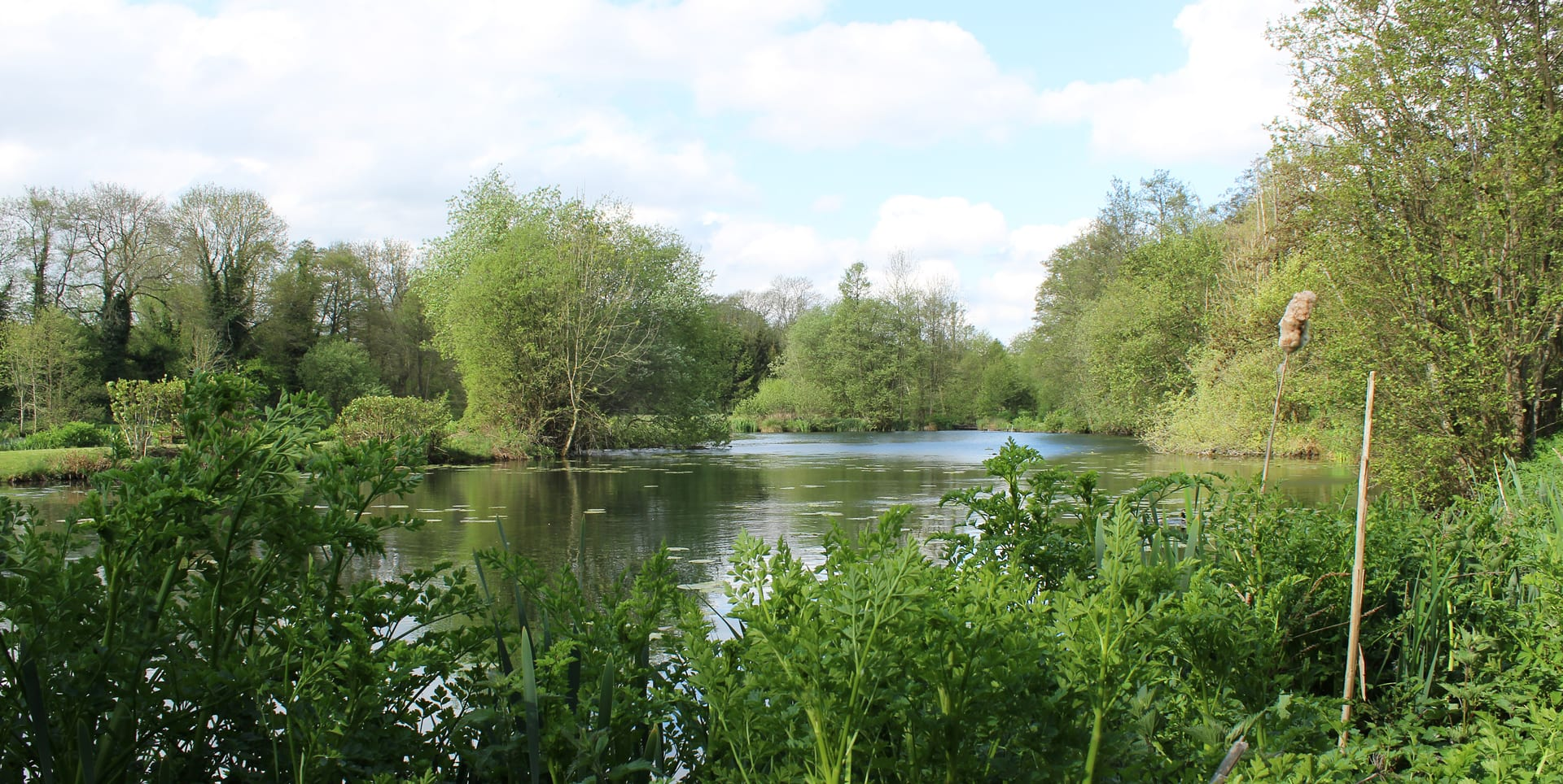 barn-elms-lily-lake