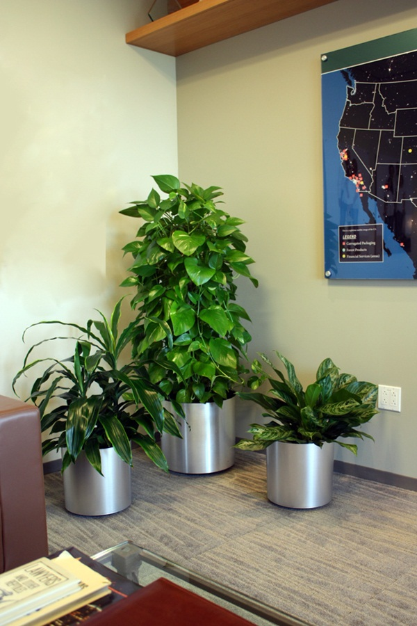 Interior Decoration Plants