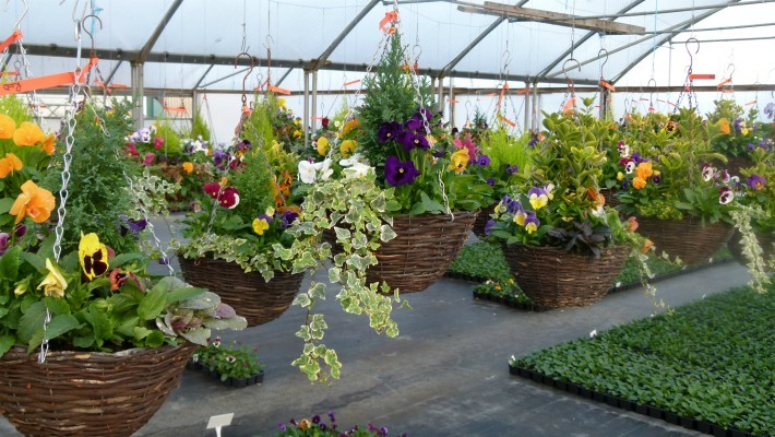Autumn/Winter Hanging Basket Workshop | Barn Farm Plants ...