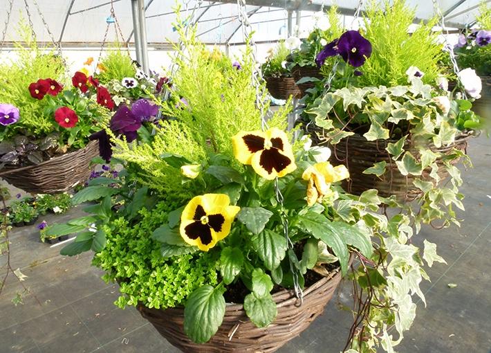 Hanging Baskets & Planted Pots - Barn Farm Plants Garden ...