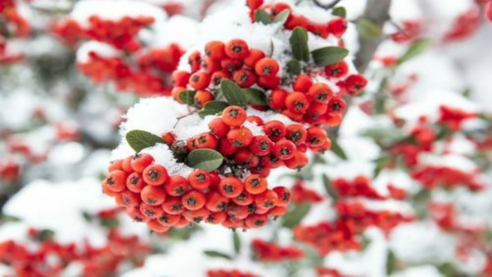 Berries in Your Garden | Barn Farm Plants Garden Centre