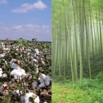 Cotton Vs Bamboo
