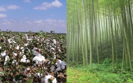 Cotton Vs Bamboo