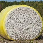 Nonwoven cotton production