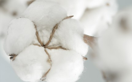 purified cotton in topsheets for feminine hygiene products