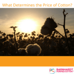 What Determines the Price of Cotton