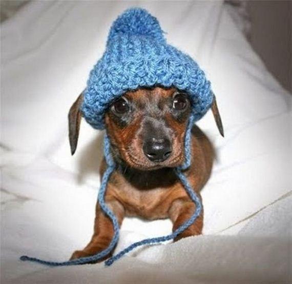 Animals Wearing Hats Barnorama