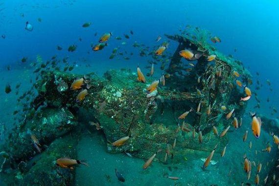 Artificial Reefs Barnorama
