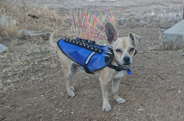 Coyote Vest Spiked Dog Harness Protects Against Coyotes