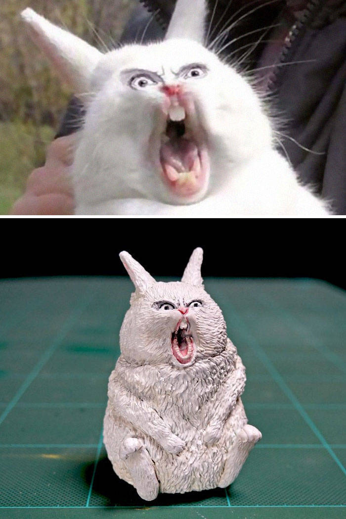 40 Awesome Real Life Versions Of Animal Memes Barnorama