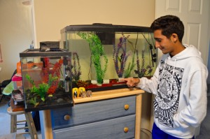 Marc Tadros ('18) shows us his vast collection of fish. Photo by Christine Cao