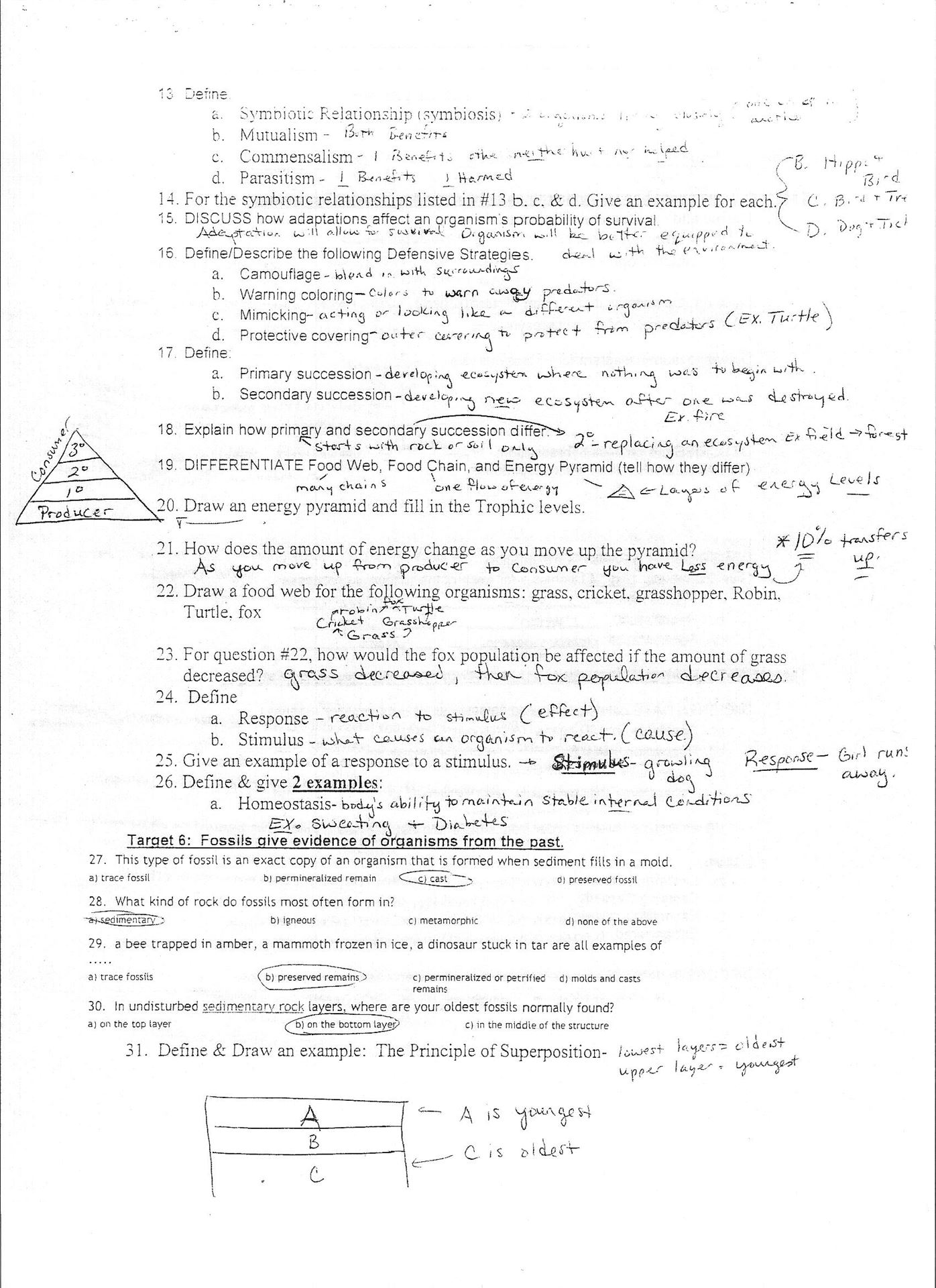 Symbiosis Worksheet Answer Key