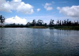 Humedal Tibanica