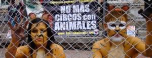 No animales en circos