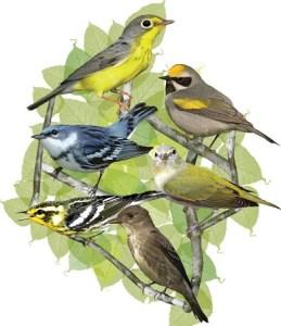 Aves Migratorias 2013