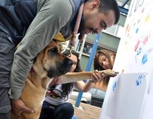 Firmatón de perros en mural de Chapinero