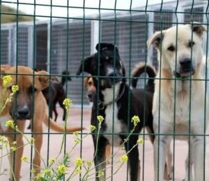 Adopción canina y felina