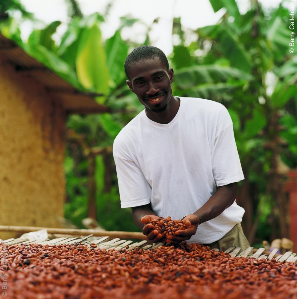 Farmer drying cocoa beans