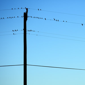 A group of small birds on a wire against a beautiful blue sky