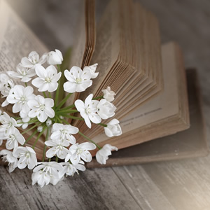 A novel with white flowers marking a page