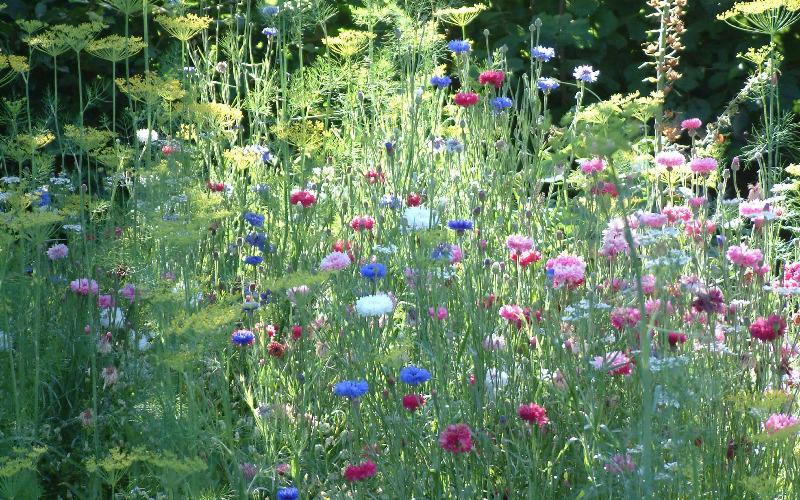 Design Your Own Garden Landscape