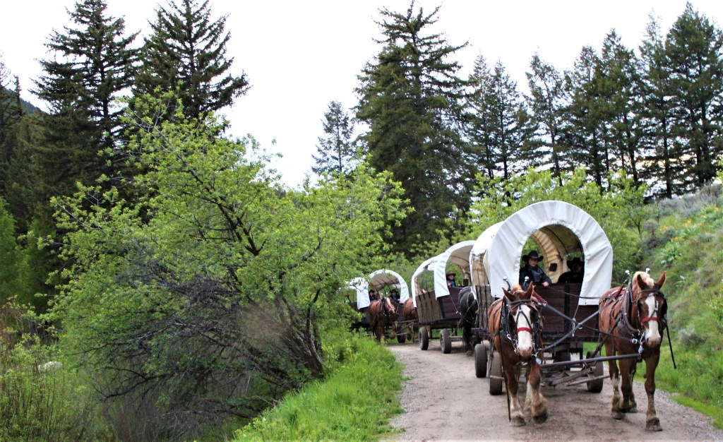 The wagons driving up Cache Creek Canyon. A good chuck wagon dinner awaits.